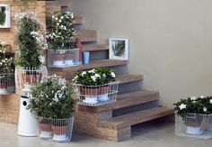Pięć+roślin,+które+warto+trzymać+w+mieszkaniu+bo…+poprawiają+nastrój!