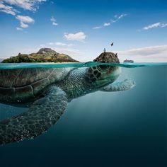animals-landscapes-digital-art-all-you-need-is-ecuador-tourism-board-manipula-3