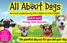 The All About Dogs Show is the UK's FAVOURITE dog event for dogs of all shapes and sizes – and it's returning even bigger and better in Bring your dog for two days full of Event Organization, Dog Show, All Dogs, Your Dog, Dog Lovers, Memes, Events, Activities, Community