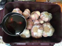 강순의 마늘장아찌 만드는법 간단합니다 이맘때 마늘장아찌 담궈 놓으면 한여름 입맛 없을때 드시기 참 좋...