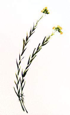 Amor,  2014. Sumi-e – Tinta sobre seda  en  soporte rígido 50 x 29,5 Alesso, Amor, Antique China, Silk, Ink