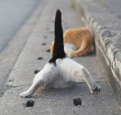 Funny Pic : A Japanese Cat life and A Drainage - Cats In Care I Love Cats, Cute Cats, Funny Cats, Funny Animals, Cute Animals, Cat Care Tips, Pet Care, Japanese Cat, Cat Photography