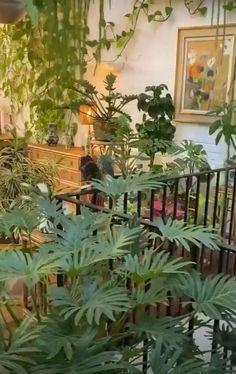 Bedroom Plants Decor, House Plants Decor, Plant Decor, Plant Rooms, Outdoor Plants, Plants On Balcony, Indoor Garden, Home And Garden, Plant Aesthetic