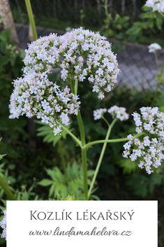 Herbalism, Herbs, Plants, Herbal Medicine, Herb, Plant, Planets, Medicinal Plants