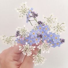 oo forget me nots. imagine i go on a trip or travel and i meet a friend and when we have to leave each other we find those flowers and i press them and we keep em forever. forget me nots.