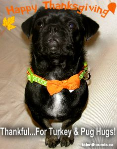 Happy Thanksgiving! - Talent Hounds