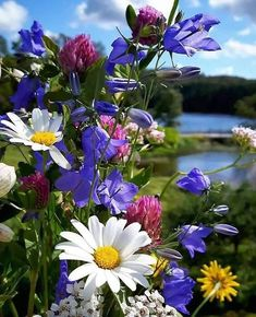 pictures - Flowers board - Make Money Flowers Nature, Exotic Flowers, Amazing Flowers, Wild Flowers, Beautiful Flowers, Flower Power, Flowers Wallpaper, Trees To Plant, Mother Nature