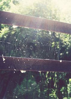 web - photo by moi :)