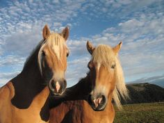 Horses Equines and human beings have a historic connection. Asian wanderers probably tamed the first horses some 4000 years ago…