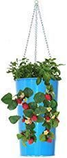 How to Stop Buying Strawberries and Start Growing Your Own in Hanging Pots How To Grow Strawberries In Containers - Gardening Channel Types Of Strawberries, Growing Strawberries In Containers, Growing Tomatoes In Containers, Grow Tomatoes, Strawberry Price, Strawberry Planters, Strawberry Garden, Everbearing Strawberries, Berry Plants