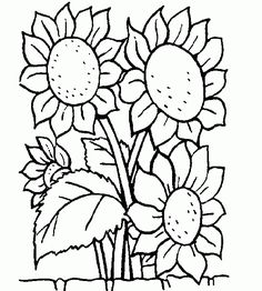 Flowers Coloring pages. Printable Flower Coloring Pages.These printable flower coloring pages are free. Coloring pictures and sheets of f. Sunflower Coloring Pages, Food Coloring Pages, Adult Coloring Pages, Coloring Pages For Kids, Coloring Books, Coloring Pages Of Flowers, Flower Coloring Sheets, Colouring Sheets For Adults, Coloring Pictures For Kids