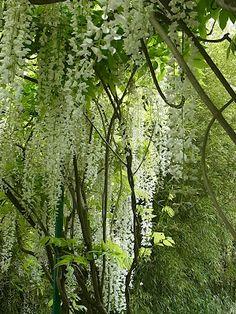 In Monet's garden , beautiful ♥
