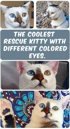 The lonely kitten without a home Bowie was abandoned in 2018 in Spain, but thankfully he was rescued and taken care of by a veterinarian's office. Check out more of its story throw this PIN ....