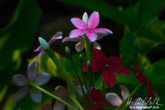 #floral #photography #hhughmiller #Singapore