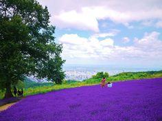 札幌市内を一望できるラベンダー畑!「幌見峠ラベンダー園」 | 北海道 | Travel.jp[たびねす] All About Japan, Japanese Landscape, Sapporo, Japanese Culture, Japan Travel, Four Seasons, Golf Courses, Scene, Park