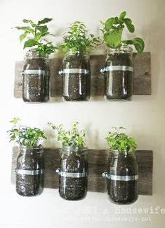 Indoor mini herb garden- used these for Christmas gifts this year. Worked out great!  Make sure you put broken pieces of terracotta pots on the bottom of the mason jar, though.  This helps aerate the soil and helps absorb excess water if you put too much in :)