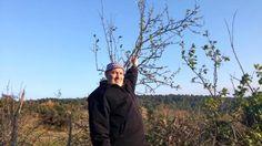 Bayramiç ilçemizde Erik ağacı kış ortasında meyve verdi....