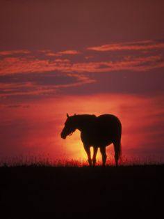 Silhouette of Horse at Sunset, Lexington, KY