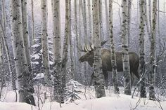 A Walk in the Woods by Stephen Lyman Moose Trees Winter Forest Poster, Overall Size Image Size: out of 5 stars via 1 rating See Buy Options in Home & Kitchen