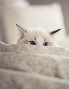 hiding..
