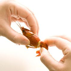 How to Eat Crawfish....for all those who visit Lousiana and avoid trying boiled crawfish because you don't know how to peel crawfish......