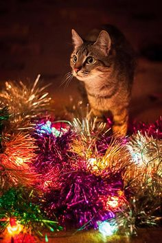 Cat & tinsel