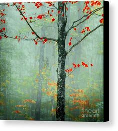 Tree Canvas Print featuring the photograph Another Day Another Fairytale by Katya Horner