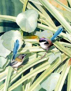 Purple Crown Wrens by Ian Roberts, South Australian Artist.