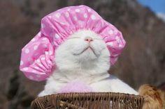 O Gato mais Zen do Mundo