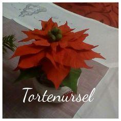Weihnachtsstern aus Blütenpaste Four Square, Tableware, Poinsettia, Stars, Dinnerware, Dishes, Serveware