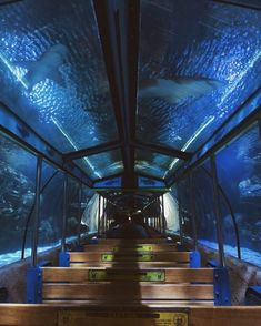 Houston's Downtown Aquarium Has An Underwater Train Ride In A Shark Tank - Narcity Texas Vacations, Vacation Places, Vacation Destinations, Dream Vacations, Vacation Spots, Places To Travel, Greece Vacation, Family Vacations, Cruise Vacation