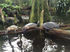 Florida Aquarium - Tampa, Florida; January, 2015