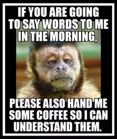 Coffee Zone, Coffee Talk, Coffee Is Life, I Love Coffee, Coffee Coffee, Coffee Beans, Coffee Quotes Funny, Coffee Humor, Funny Quotes