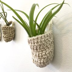 New! Air-plant wall basket sets available to bring the spring in!
