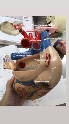 Medicine Notes, Med Student, Medical Assistant, Med School, Biology, Diabetes, Anatomy, Education, Health