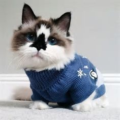 sweater-cat