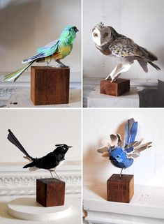 Sculptures by Anna-Wili Highfield. Top left - Grass Parrot, 2010. Owl perched, 2010. White Winged Wren, 2010. Willie Wagtail, 2010.