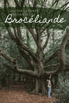 Visiting Brocéliande – the Heart of the King Arthur Legends Magical Tree, Magical Forest, Dark Forest, Road Trip France, France Travel, Beautiful Places To Visit, Oh The Places You'll Go, King Arthur Legend, Forest Sunset