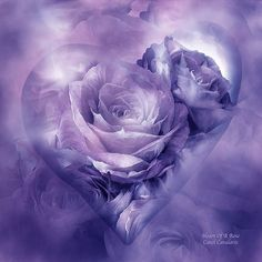 To My Purple Lovers
