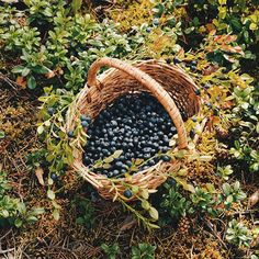 Michael gathers berries and herbs from the forest during the morning and tends to the crops I the afternoon. Katniss Everdeen, Anne Of Green Gables, Farm Life, Country Life, Grape Vines, Farmer, Cottage, Seasons, In This Moment