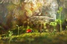 Under umbrella by macrofun