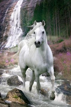 Something About Horses added a new photo. - Something About Horses Beautiful Horse Pictures, Beautiful Arabian Horses, Most Beautiful Horses, All The Pretty Horses, Animals Beautiful, Cute Horses, Horse Love, Cavalo Wallpaper, Horse Wallpaper