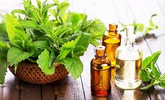 Peppermint Oil Uses. Peppermint Oil as a Home Remedy. Fast and Natural use of Peppermint Oil. Peppermint oil for body and health. Essential Oils For Vertigo, Best Essential Oils, Essential Oil For Pneumonia, Herbal Remedies, Home Remedies, Natural Remedies, Oil Cleansing, Remedies For Menstrual Cramps, Peppermint Oil
