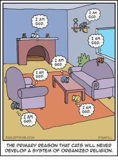 Want to keep updated on the latest religion news articles? Well, you've come to the right place. Check out our religion content! Cartoon Jokes, Funny Cartoons, Cute Cats, Funny Cats, Funny Animals, Silly Cats, Best Funny Jokes, Hilarious, Funny Quotes