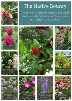 Pledge to Plant – Project Food Forest Homestead Gardens, Farm Gardens, Permaculture Design, Permaculture Garden, Gardening, Organic Fruit Trees, Aquaponics Greenhouse, Apartment Plants, Plant Projects