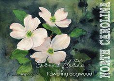 Watercolor ACEO // North Carolina // Flowering Dogwood // Cornus florida // State Flowers