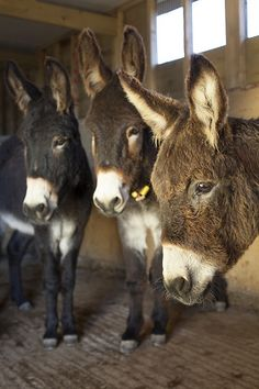 _MG_0074 by Donkey Sanctuary Press Images, via Flickr