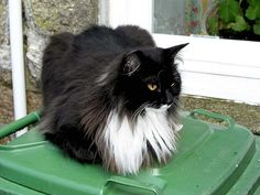 Prince Cat | Pawshake Milton