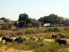 On my dream list- safari at Mala Mala. African Safari, Lodges, My Dream, South Africa, Maine, To Go, Elephant, Camping, World