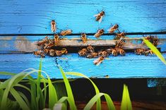 What Is Killing All the Bees? | TakePart.com #nature